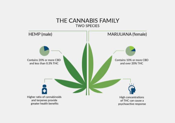 The Cannabis Family